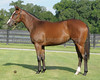 2009 OBS  August Select Yearling<br /> Hip 115<br /> Indian Ocean-Minster Abbey 2008 filly