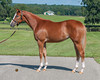 62obsaug13_Yes Its True-Ambition Unbridled12f _0231