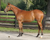 2009 OBS  August Select Yearling<br /> Hip 159<br /> Peace Rules-Shady Woman 08c