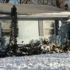 my poor bushes - Jan 2013 after blizzard in Dec 2012 - hope they come back??