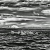 """02 Sep 14.  Today's B&W submission might also come under the category of Thursday's theatrical approach in that I've modified one aspect of it just for fun. This is another shot taken on the trip with the cherubs out to Matsmats inlet on the day the outboard decided to give us a little concern. This shot was one I got while it was still running, and was just shortly before it quit for the better part of an hour, perhaps longer. Hard to keep track of time when you are having fun. The seals had been watching us rather intently, some on the rock, some in the water at a distance, and several more in the water quite near us while the outboard was not playing nice. Once we got it running again the close in group gave us some space and we motored over to the rock and made a 360 around it. In so doing all but one of the critters decided that being in the water was a better option than being """"on the rock"""", and each, in turn, as we neared them, slipped into the water. The tide was running against us as we tried to enter Matsmats cove and the wind was doing its best to give us a little challenge as well. There was also a fair amount of cloud cover that was being blown around by the wind but not sufficiently so for the """"effect"""" I wanted in this image, so I've """"blown"""" on it some to give it a more wind swept look, like that of the '57 Dodge, for those of you who can remember back that far. And obviously I've converted it to B&W, otherwise, it is pretty much right out of the camera. Nikon D300s; 18 - 200; Aperture Priority; ISO 200; 1/640 sec @ f / 9."""