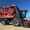 Case IH 2013c 625 cotton picker ft rt