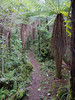A beautiful soft track through ferns to the swingbridge.