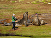 Southern Elephant Seals Sparring -M