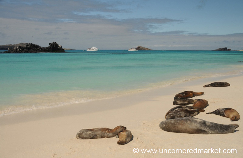 Lazy Sea Lions - Galapagos Islands