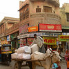 Ox Cart Through Bikaner, India