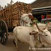 Ox Cart Jam - Kollam, India