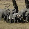 2008 East Africa Great Migration Tour