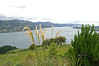 The Otago Harbour basin as seen from Larnach Castel, Otago Peninsule, South Island, New Zealand; gardens