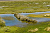 Swamp  in the highlands of Pampa Canahuas National Reserve, Peru
