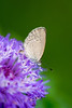 INSECT - moth on flower-2994