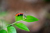 INSECT - at lunch-3046