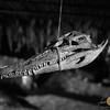 Lundayeh House Crocodile Skull