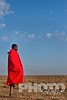 Side view of lone Masai warrior wrapped in traditional red shuka, standing in traditional one-leg stance,surveying savanna, early morning, Masai Mara, Kenya, Africa
