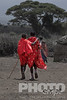 Two young Masai warriors walking towatrds village manyatta, with one arm draped over other's shoulder, dressed in traditional bright red shukas, rest of image desaturated, Masai village, Kenya, Africa