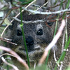 693 Cape Hyrax, Boulders Beach, Cape Point Peninsula