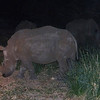158 Night Drive, Kruger National Park