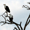219 Eagles, Kruger National Park