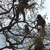 220 Baboons, Kruger National Park
