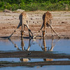 "<b>Hwange National Park, Zimbabwe</b> Two giraffes stoop to drink at a watering hole in <a href=""http://en.wikipedia.org/wiki/Hwange_National_Park"" target=""link target"">Hwange National Park</a>"