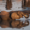 "<b>Hwange National Park, Zimbabwe</b> An elephant drinks at a watering hole in <a href=""http://en.wikipedia.org/wiki/Hwange_National_Park"" target=""link target"">Hwange National Park</a>."