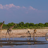 "<b>Hwange National Park, Zimbabwe</b> Giraffes and zebras drink at a watering hole in <a href=""http://en.wikipedia.org/wiki/Hwange_National_Park"" target=""link target"">Hwange National Park</a>."