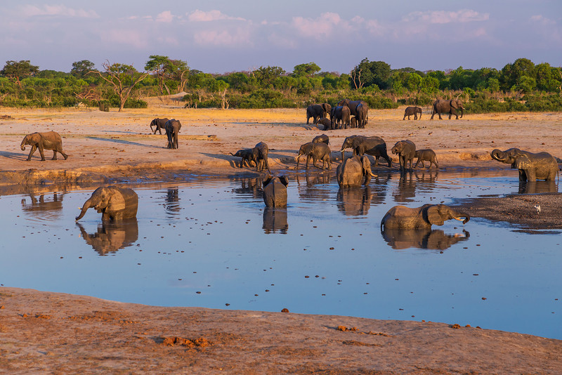 Hwange National Park, Zimbabwe Elephants drink and frolic at a watering hole in Hwange National Park.