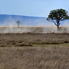 Dust, rising up as smoke...is an integral part of the Serengeti.........