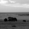 Signature Serengeti........, truly a magical place......