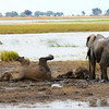 Chobe National Park<br /> Botswana, June 2014