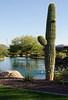 Tall cactus and lake 5222