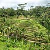 Hillside Rice Paddies On Bali