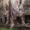 Spung Tree at Preah Khan Temple