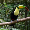 Toucan live as cheaply as one