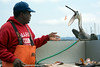 Monterey Fish Cleaning_20140806  014