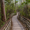 Corkscrew Swamp Sanctuary - Audubon Center Naples, Florida