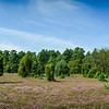 Germany, Celle, city, Niedersachsen, landscape, wideangle, nature, wildlife, summer, Lunenburg Heath, canon ef-s 10-18 stm