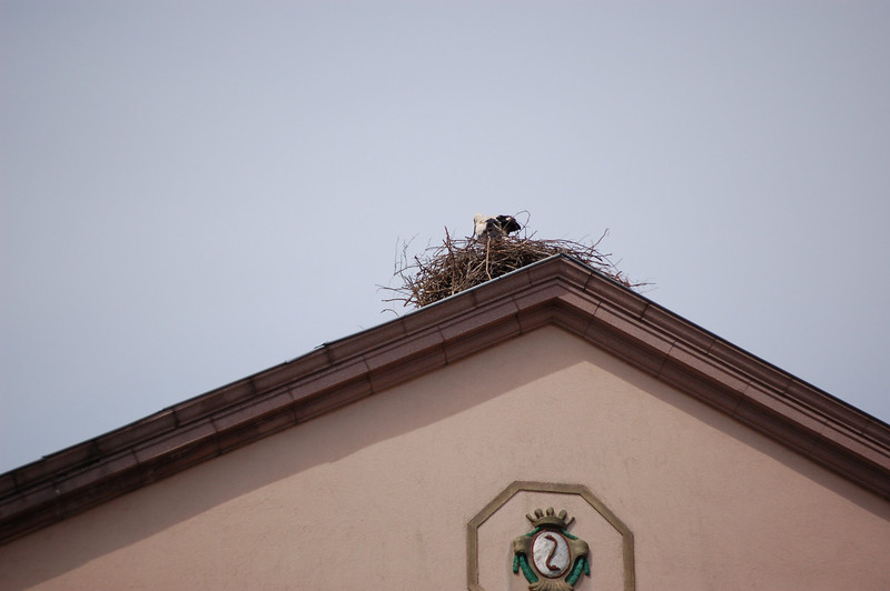 Birds Nest on top of Roof of Building in Bitche, France