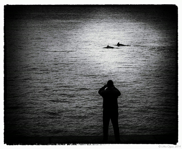 Dolphins on the Bosphorus...