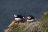 Atlantic puffin pair.     Látrabjarg bird cliffs, Westfjords, Iceland.  June 18, 2010
