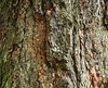 Tree Bark, Gardens of Powerscourt, County Wicklow