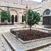 Courtyard at Nativity church- fruit trees in bloom in January