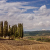 Cypress Trees of San Quirico D'Orcia