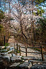 2013-04-21_Seoul_Namsan_SpringBlossoms_Forest Trail-8043