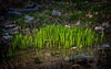 2013-04-21_Seoul_Namsan_SpringBlossoms_On_Reeds-8042