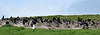 Cormorant-nests-Cape-Breton-NS