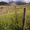 Fields of wildflowers.   near Xinaliq, Azerbaijan