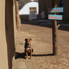 Taos four-legged resident