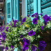 Colorful window boxes on storefront, Royal Street, New Orleans