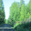 Nass Forestry Road and Nisga'a Hwy (2)
